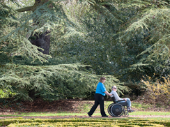 Trees-nurse-man-wheelchair