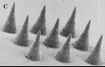 microneedles-microscope